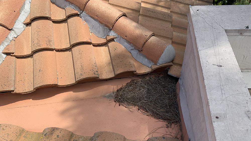 studio city california apartment roof maintenance work